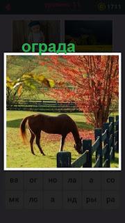 пасется лошадь около ограды в виде забора осенью