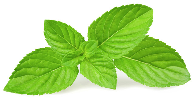menthe-images