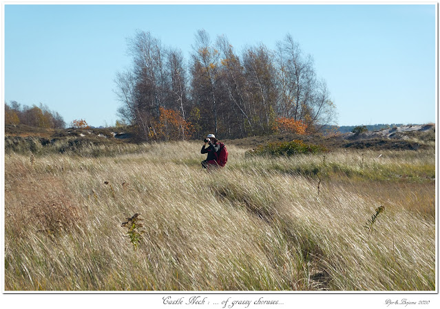 Castle Neck: ... of grassy choruses...