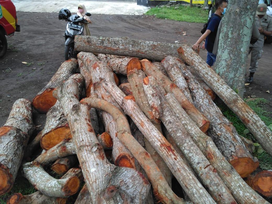 Penebang Liar Pohon Pelindung Dilepas, Penjual Masih Buron