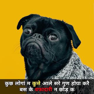 haryanvi funny status haryanavi 2019 image