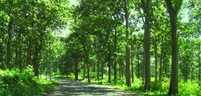 Mengenal Pohon kayu Jati