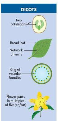 Lesson Plan of Characteristics of Monocot and Dicot PlantsGeneral