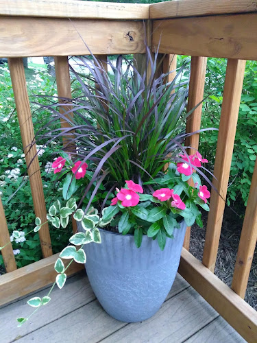 Pot of purple fountain grass with pink flowers