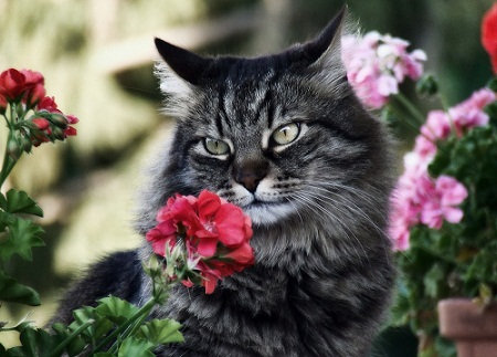 Cat Image with Flowers