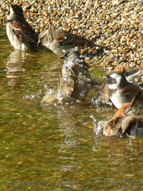 Ungardening Pond 2011