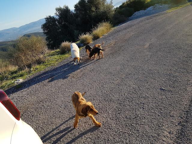 ΄Επειγον: Εγκατέλειψαν σκύλα και τα τέσσερα κουτάβια της στη μέση του πουθενά