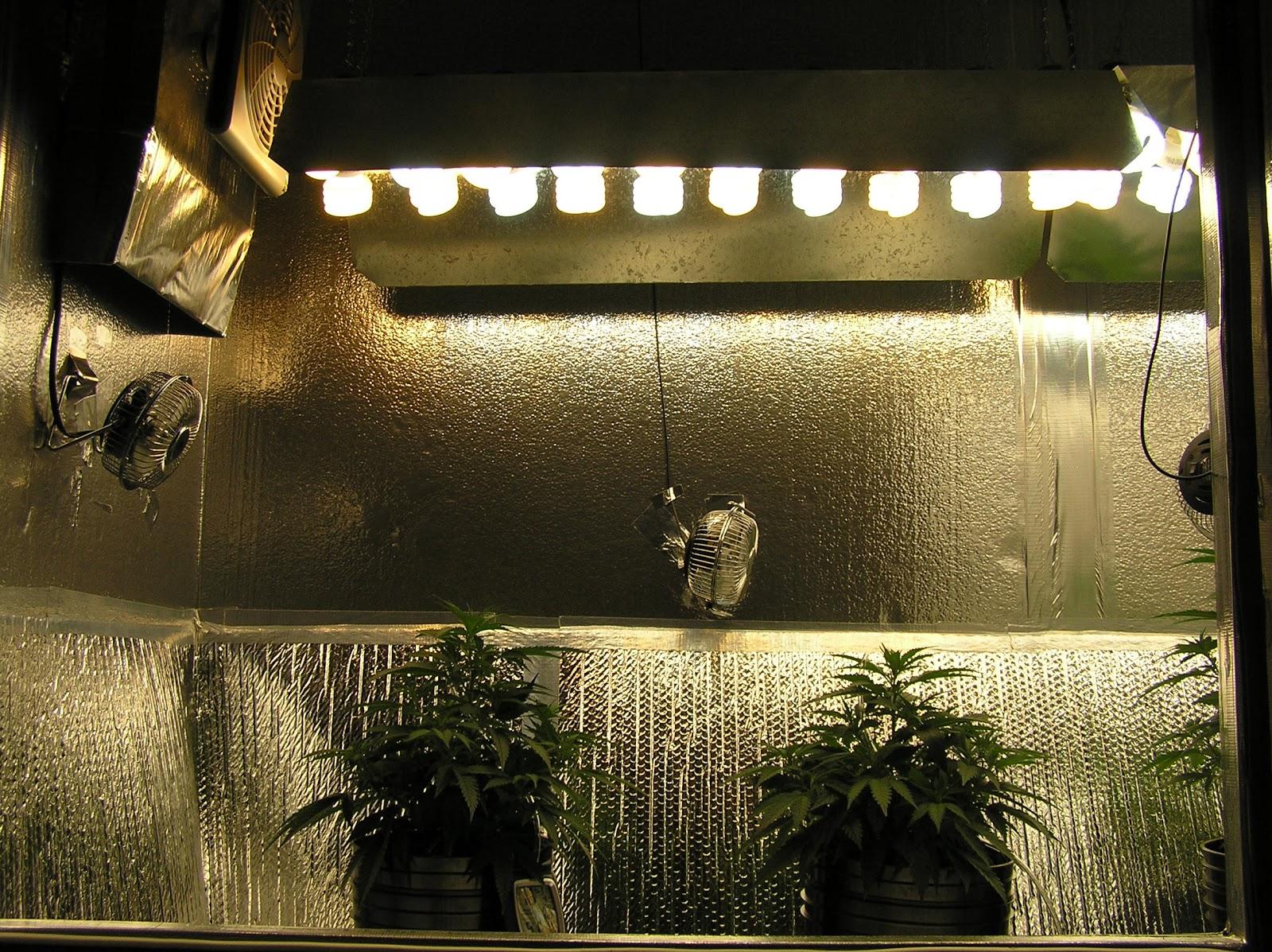 Alternative Weed Grow Light Types Led Vs Cfl S