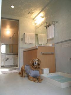 banheiro para cães