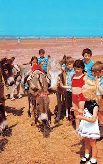 Beach sands donkeys