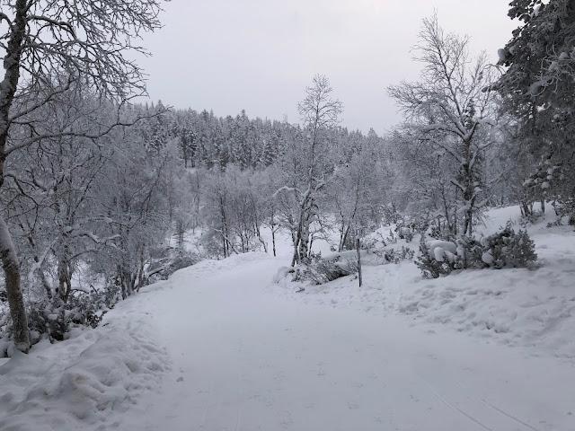 Aurorapolku ja kota patikoijille Saariselällä