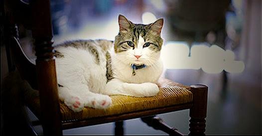 Oscar o gato que preve a morte