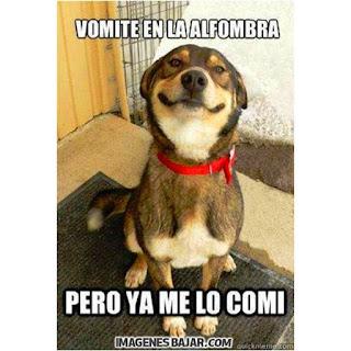 imagenes chistosas de perros graciosas