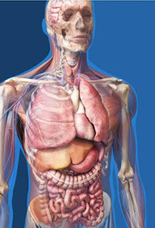 Anatomy model question for MBBS students in Bangladesh