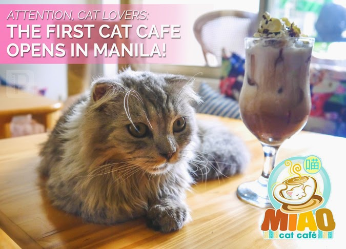 Attention, Cat Lovers: Miao Cat Café Opens in Manila!