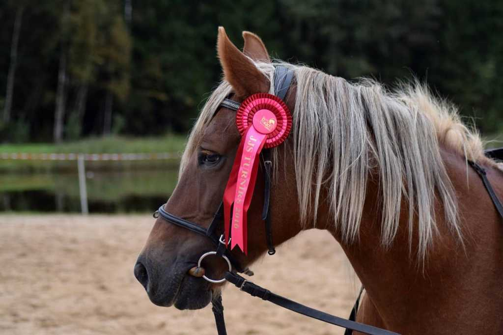 The Horse Trainer: How to Become One and What