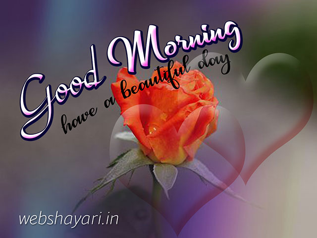 good morning images with cute rose flower