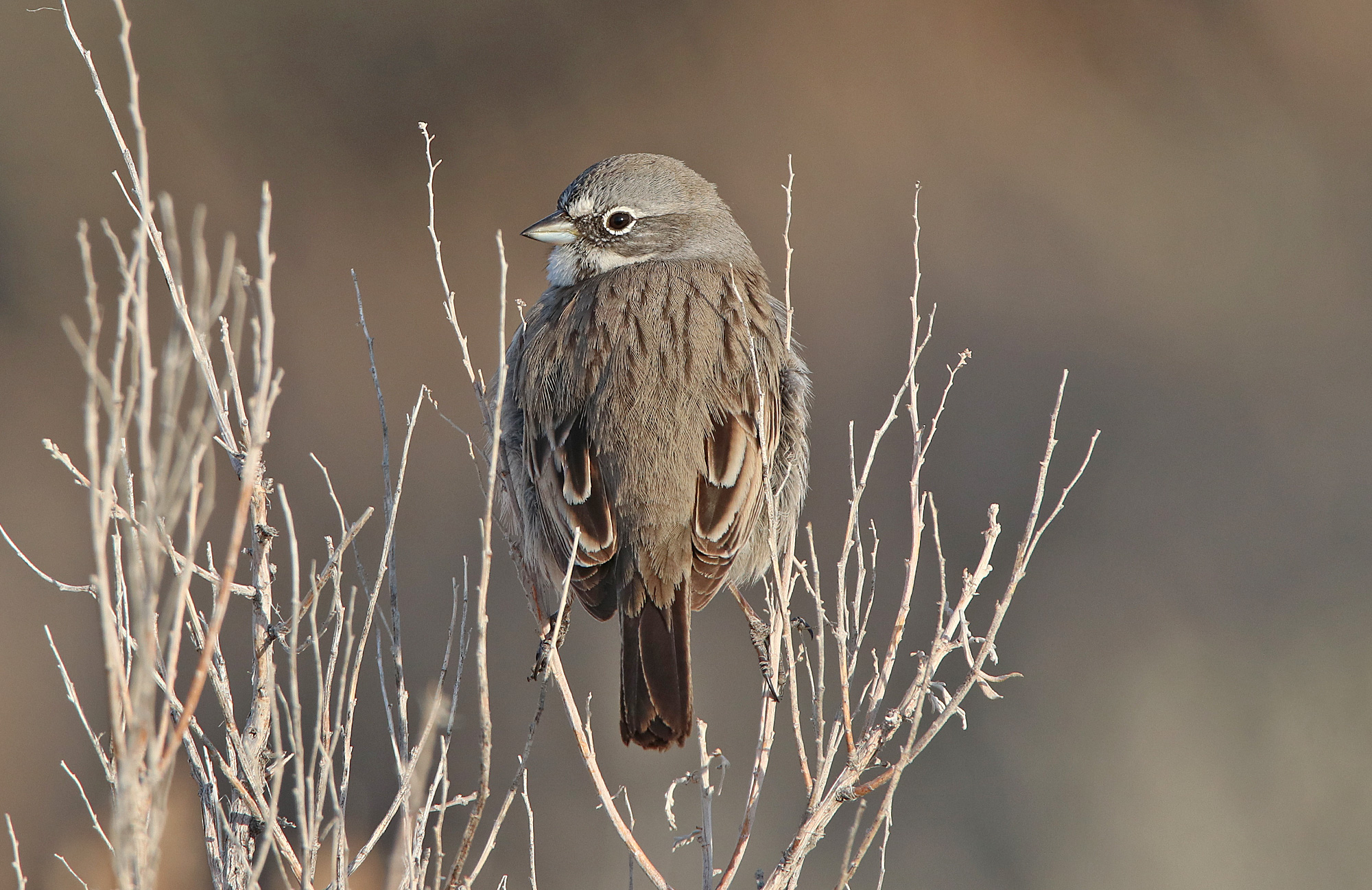 Utah Birding Tours
