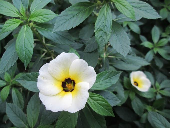 """Dịch thuật: Xuân xanh xấp xỉ tới tuần cập kê (36) (""""Truyện Kiều"""")"""