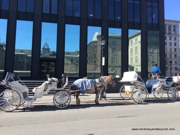 horse-drawn carriages waiting for a fare in Vieux-Montréal, Canada