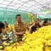 Tomohon Produksi 3,5 Juta Tangkai Bunga Krisan Pertahun