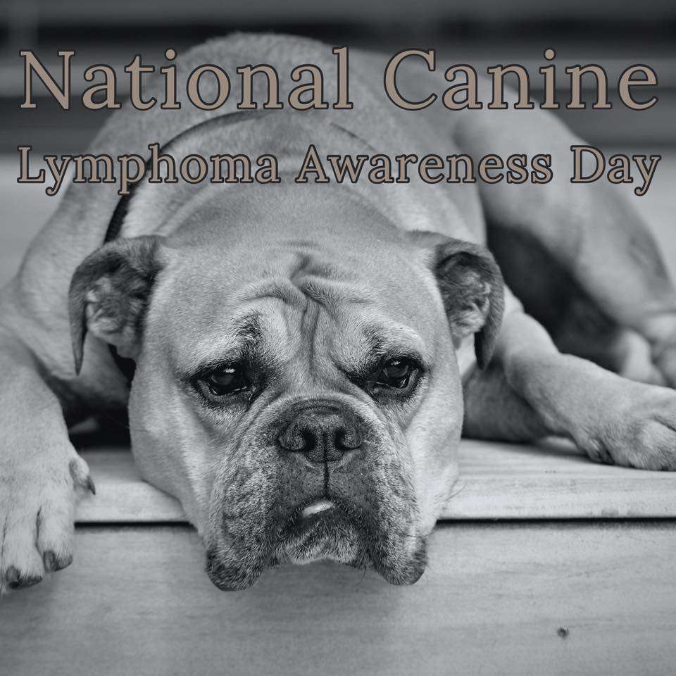 National Canine Lymphoma Awareness Day Wishes For Facebook