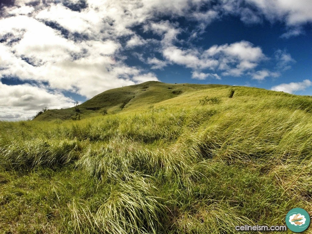 Cogon grass mountain