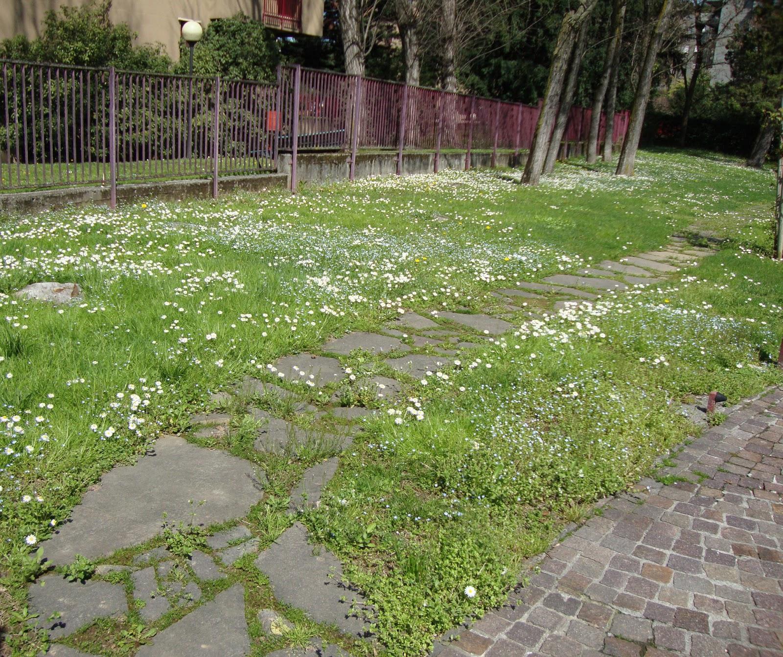 Un piccolo giardino in citt luglio 2013 for Prato manutenzione