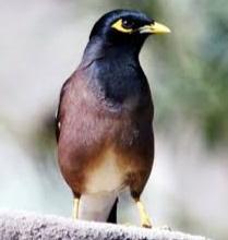 Penyebab Bulu Burung Rontok
