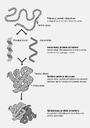 BIOLOGI Tingkatan 4 + Tingkatan 5