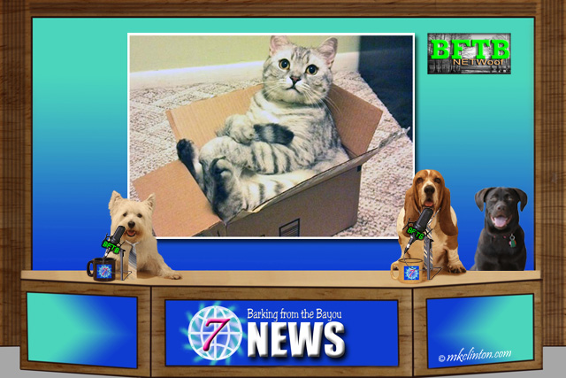 BFTB NETWoof News with a cat in a box in background