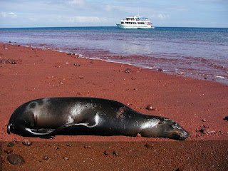 5 razones para visitar las Islas Galápagos en Ecuador