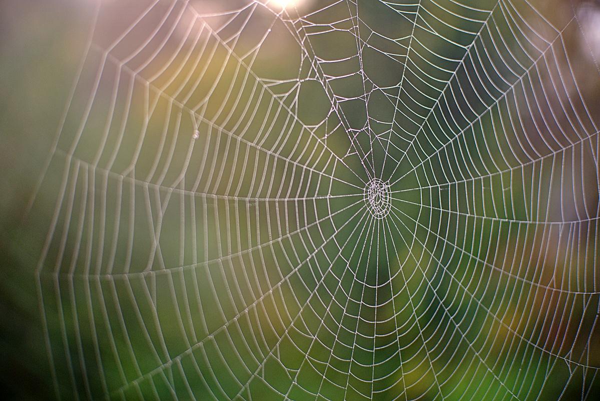 #291 NEEWER HD.MC f1.8 25mm – Spinnennetz mit Tau