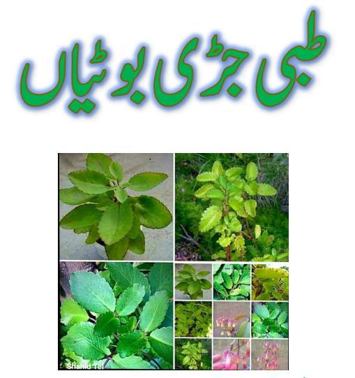 (طبی جڑی بوٹیاں نام اور رنگین تصویر کے ساتھ)Medicinal herbs with name and color picture