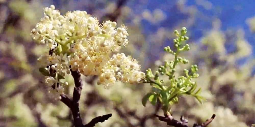 literatura paraibana ensaio agricultura caatinga sertao nordeste umbu algodao