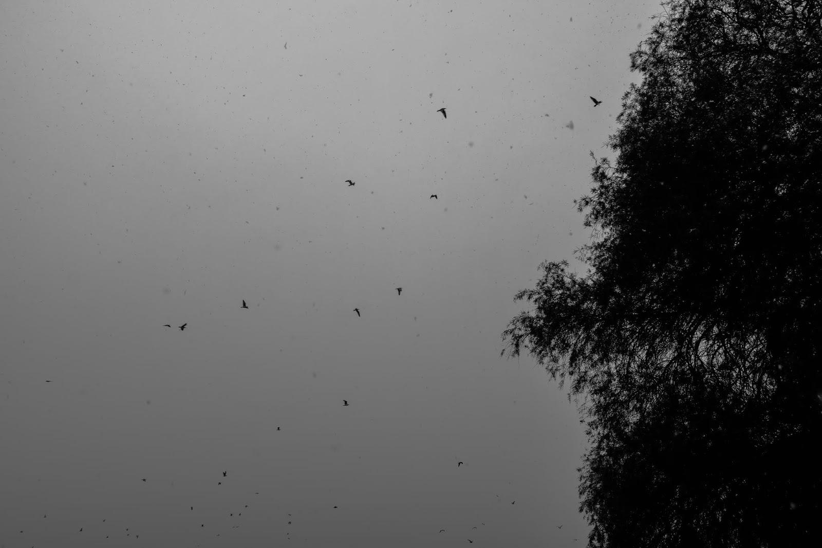 Λίπος μουνί μαύρες φωτογραφίες