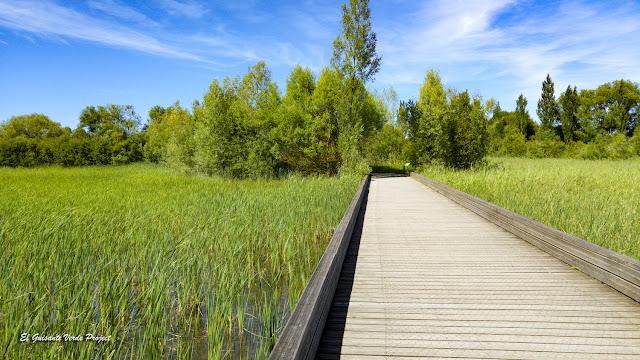 Parque de Salburua, pasarelas de madera