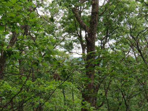 Ward Hills view
