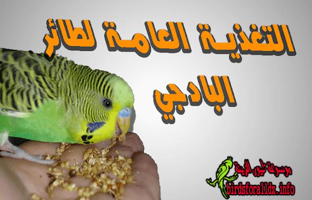 تغذية طائر البادجي العامة