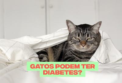 Gatos podem ter diabetes?