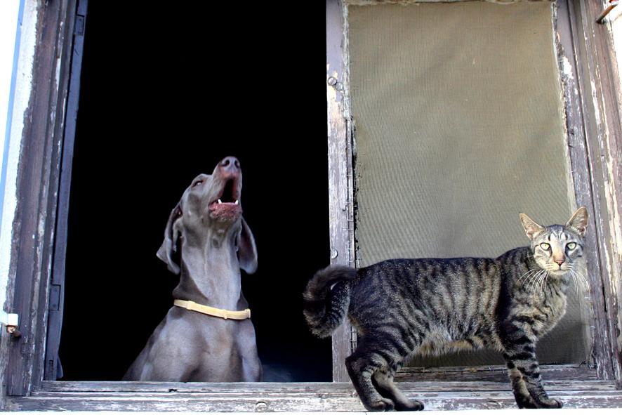 purebred cat rescue kenosha wi