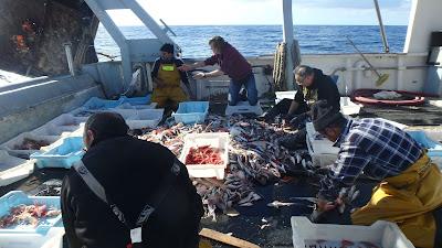 Pescaturismo Mallorca Selección del pescado durante las excursiones