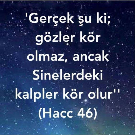 Hacc 46