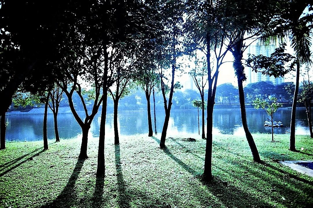 The Landscape 04