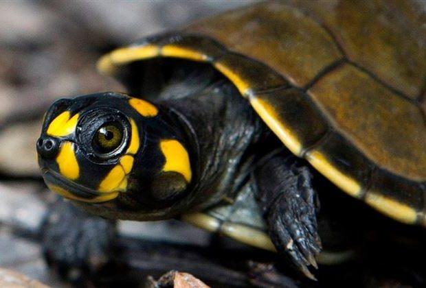 Εκατομμύρια άγρια ζώα διακινούνται παράνομα κάθε χρόνο από τον Αμαζόνιο