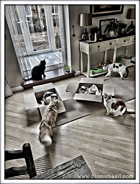Five Cats And Two Boxes ©BionicBasil® Caturday Art Hop