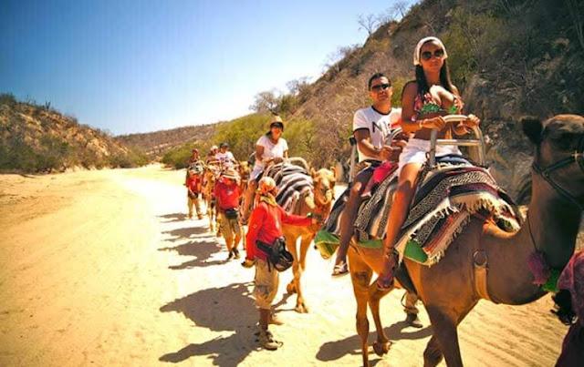 Camel Ride in Cabo San Lucas