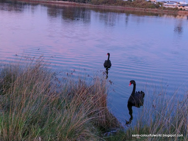 The black swans