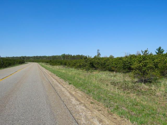 Jack Pines - Grayling, Michigan, USA