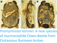 https://sciencythoughts.blogspot.com/2019/06/promyrmister-kistneri-new-species-of.html